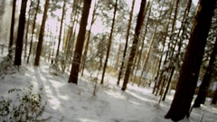 Sunny Winter Forest Stock Footage