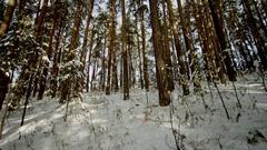 Beauty of Winter Forest below Stock Footage