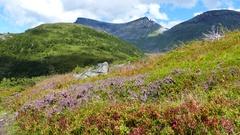Calluna and grass mountain landscape Stock Footage