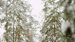 Hoarfrost on branches in the forest at winter Stock Footage