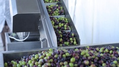 Olive Oil Production Process Stock Footage