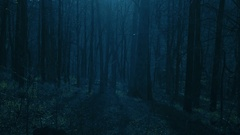 Night in Moonlit Wood Ethereal Light in the Forest Stock Footage