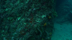 Beer can sinking to sea floor Stock Footage
