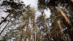 View of Winter Forest Stock Footage
