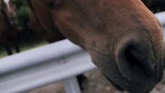 Extreme close up of horse head, eye and nose Stock Footage
