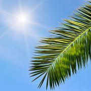 Leaves of tropical palm trees and blue sky Stock Photos