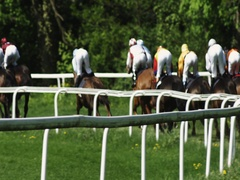 Gallop Race in slow motion Stock Footage