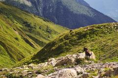 Horse on rocky outcrop, Ushba Mountain, Caucasus, Svaneti, Georgia, USA Stock Photos