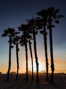 Silhouette of palm trees, Santa Monica, California, USA Stock Photos