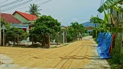 Man Smoothes Road Metal on Small Street with Houses Trees Palms Stock Footage