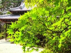 Japanese garden and trendy areas of garden art in Nanzen-ji Templem, Kyoto Japan Stock Footage