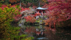Group of travellers visit to Autumn at daigoji temple , Kyoto ,Japan Stock Footage