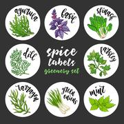 Spices herbs labels. Colored vector greenery set Stock Illustration