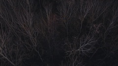 Top view of autumn forest without leaves Stock Footage