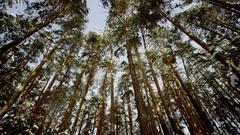 Beautiful Winter Forest below Stock Footage