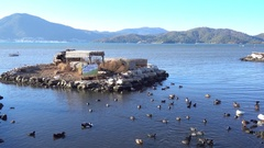 Ducks islands and flock of hungry ducks Stock Footage