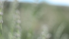 Flying in a field with wild flowers, herbs.Wildflowers in a summer field. Video. Stock Footage