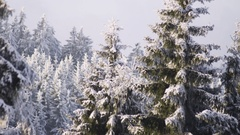 Winter Wonderland Stock Footage