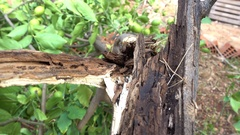 Broken rotten wood Stock Footage