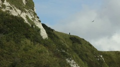Folkestone Warren cliff, Kent, England Stock Footage