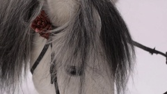 Gray Horse in winter Forest Stock Footage