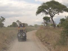 CLOSE UP: Private safari game drive through tropical savanna in wildlife resort Stock Footage
