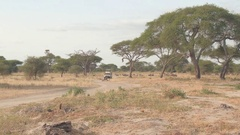 CLOSE UP: Safari jeep game driving tourists in sunny African savanna past zebras Stock Footage