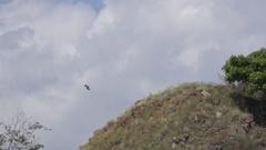 4k Flores hawk-eagles tracking shot flying over island hills Stock Footage