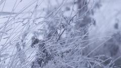 Hoarfrost on meadow Stock Footage
