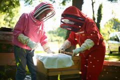 Two beekeepers lifting frame from bee hive Stock Photos