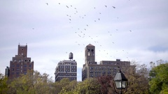Birds flocking - pigeons flying over colorful leaves on fall trees in NYC Stock Footage