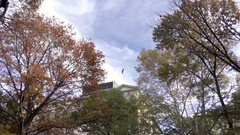 NYU flag building through colorful fall leaves trees Washington Square Park NYC Stock Footage