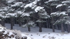 Heavy snow, trees with snow on the branches and frozen herbs Stock Footage