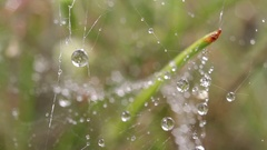 Beautiful water drops on spider web close-up. Dolly slider shot. Stock Footage