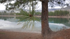 Ponderosa Pine with quiet River backdrop and sky reflections Stock Footage