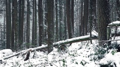 Passing Forest Slope Buried In Snow Stock Footage