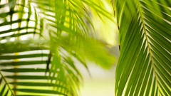 Jungle Rain On Leaves Shifting Focus Stock Footage