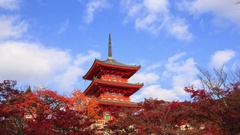 Red fall leaves autumn at Kiyomizu-dera temple in Kyoto, Japan Stock Footage