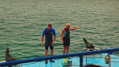 Trainers Guy Girl Show Tricks with Fur-seals in Ocean Circus Stock Footage