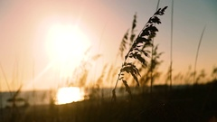 Sunny day wind blowing on dune grass at the Coast. Florida Stock Footage