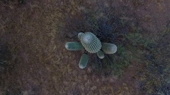 Top-down orbit of a desert saguaro cactus Stock Footage