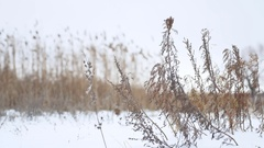 Dry winter grass sways in the wind in snow landscape nature Stock Footage