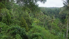 Densely overgrown green jungle. Lots of tall palm trees in a tropical forest Stock Footage