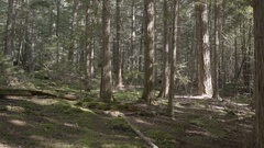 Still Shot of Forest Floor in Great Bear Rainforest Stock Footage