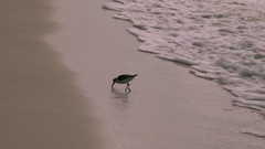 Cute seagull walking on white sand near gentle seashore water waves with Stock Footage