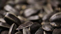 Organic Sunflower Seed Stock Footage