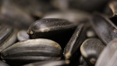 Sunflower Seed Macro Stock Footage