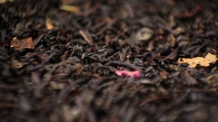 Black Tea Stock Footage