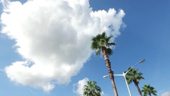 Exterrior SHot of Car Driving By Palm Trees Stock Footage