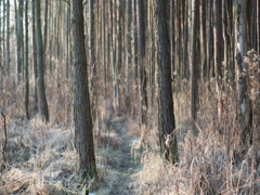 WINTER FOREST TIMELAPSE WITH BEAUTIFUL LIGHT REFLECTIONS Stock Footage